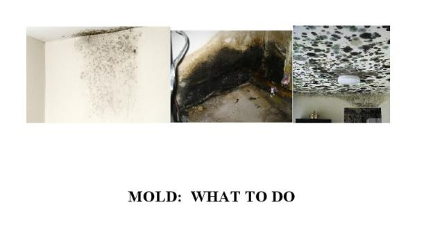 Mold: What to do